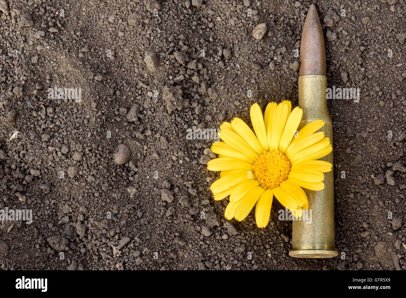 Da 7,62 mm di proiettile e le munizioni guscio con un fiore giallo della pace in appoggio su un polveroso sfondo Immagini Stock