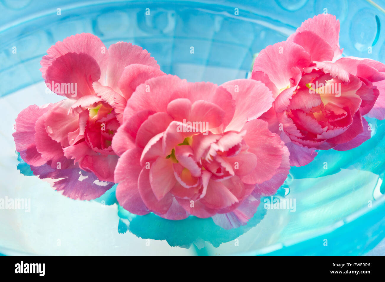 Rosa fiori di garofano in acqua, di meditazione e di consapevolezza Immagini Stock