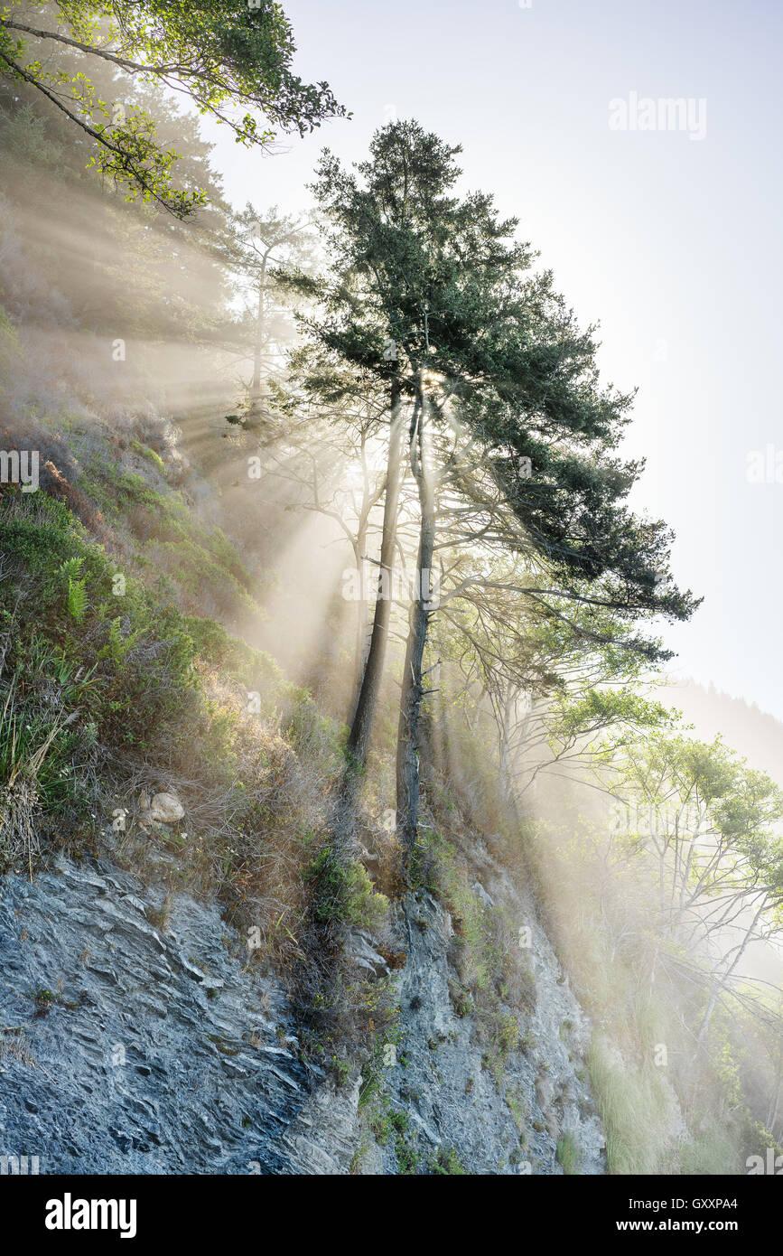 Il sole splende attraverso gli alberi su perso costa della California. Immagini Stock