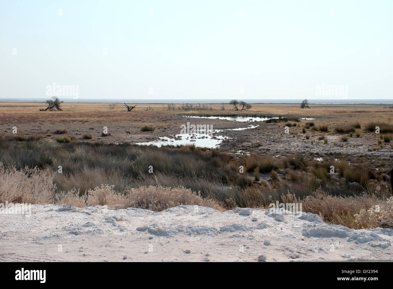 Il Parco Nazionale di Etosha, Namibia, Agosto 2016 Immagini Stock