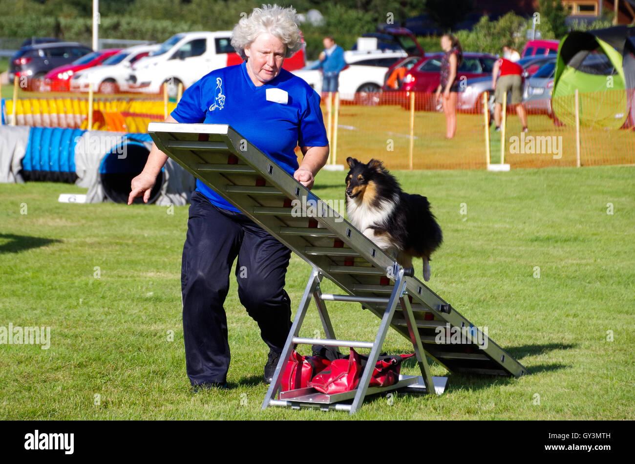 Un concorrente in agilità del cane di concorsi con la sua sheltie sull'altalena Immagini Stock
