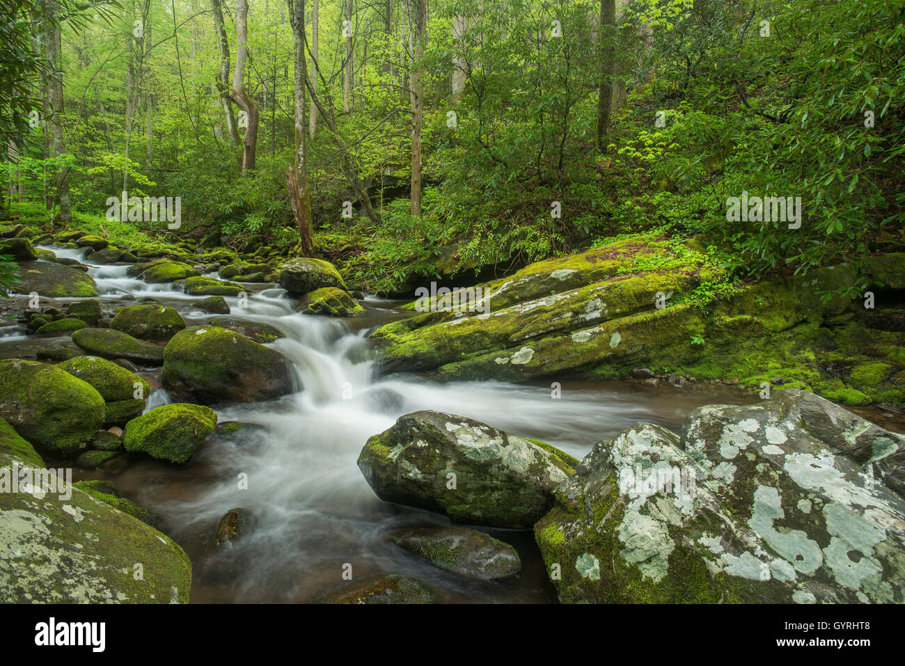 Moss-coperta di rocce e massi lungo Roaring Fork River, estate, Great Smoky Mountain National Park, Tennessee, Stati Immagini Stock