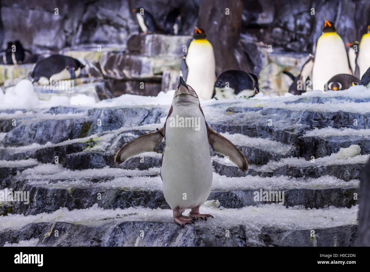 Pinguino solo Immagini Stock