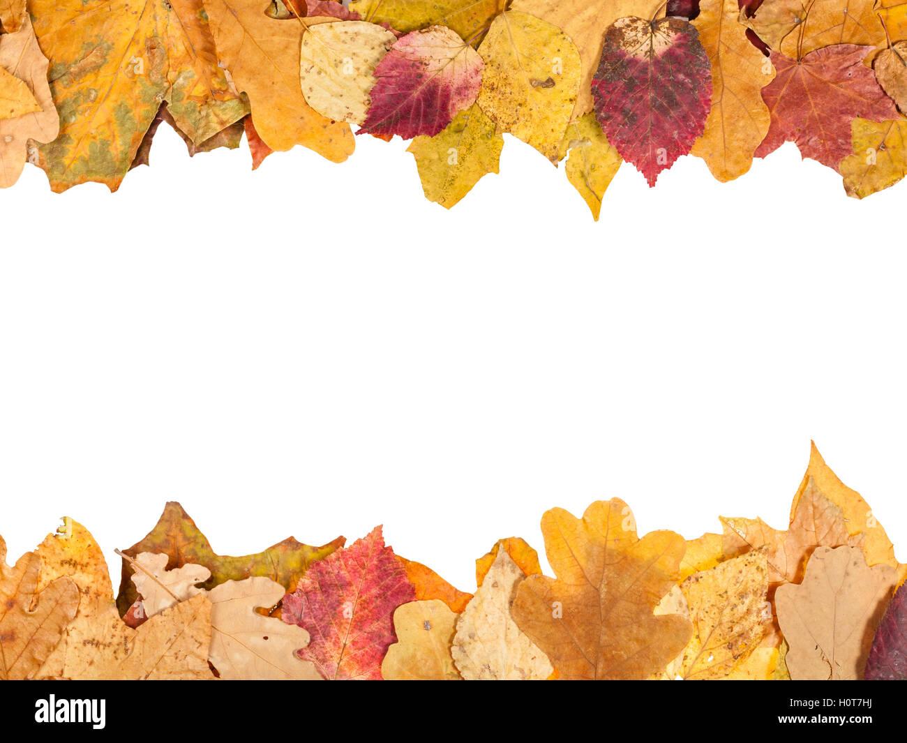 Telai superiore e inferiore dalla caduta foglie di autunno con il semilavorato tagliato fuori spazio Immagini Stock