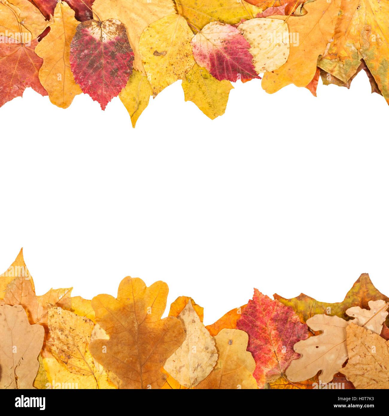 Telai superiore e inferiore da foglie di autunno con il semilavorato tagliato fuori spazio Immagini Stock