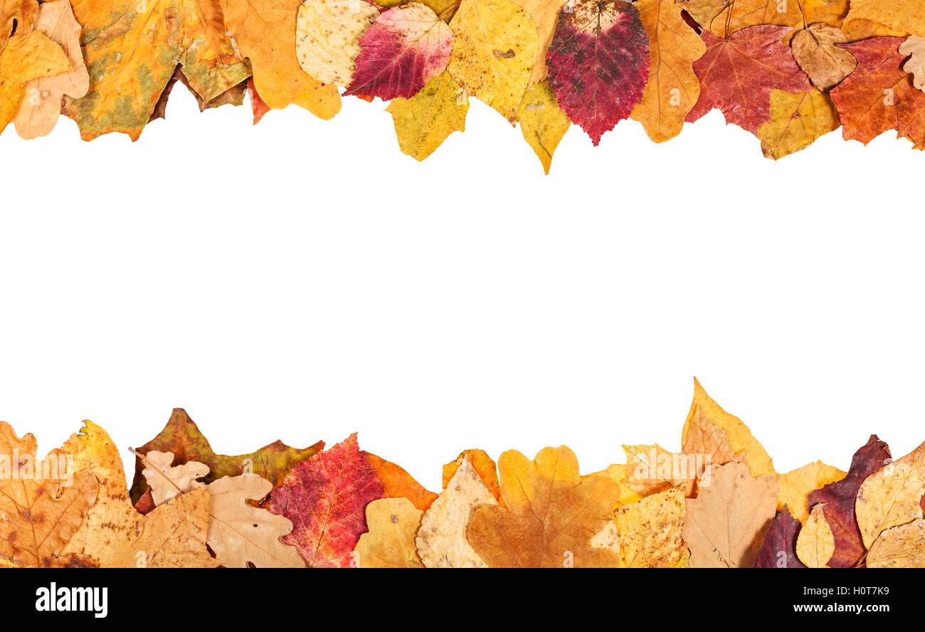 Telai superiore e inferiore dal giallo Foglie di autunno con il semilavorato tagliato fuori spazio Immagini Stock