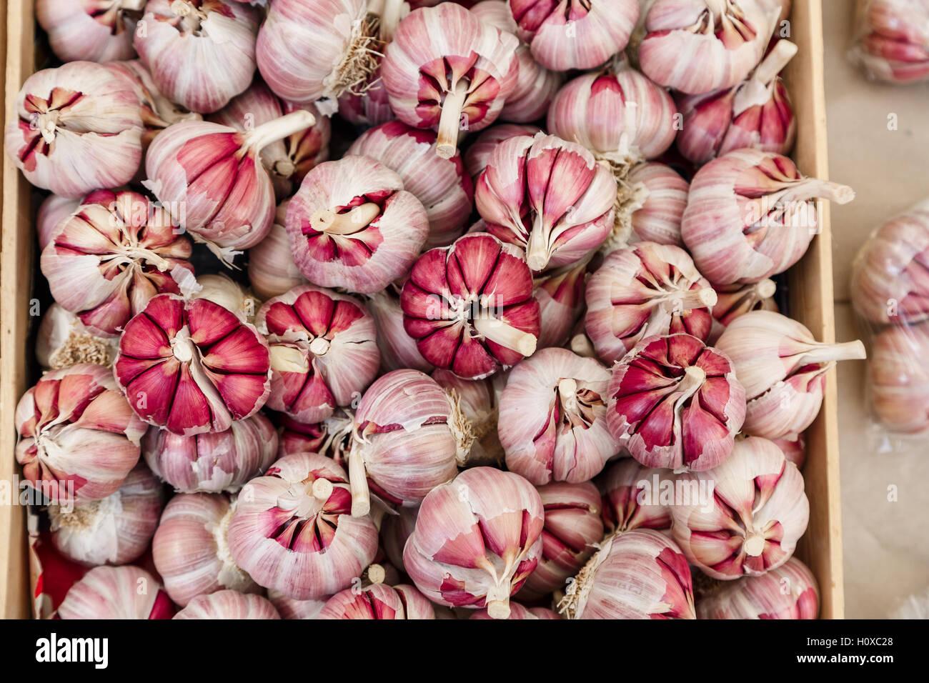 Aglio Rosso di lampadine per la vendita, Palermo, Sicilia Immagini Stock