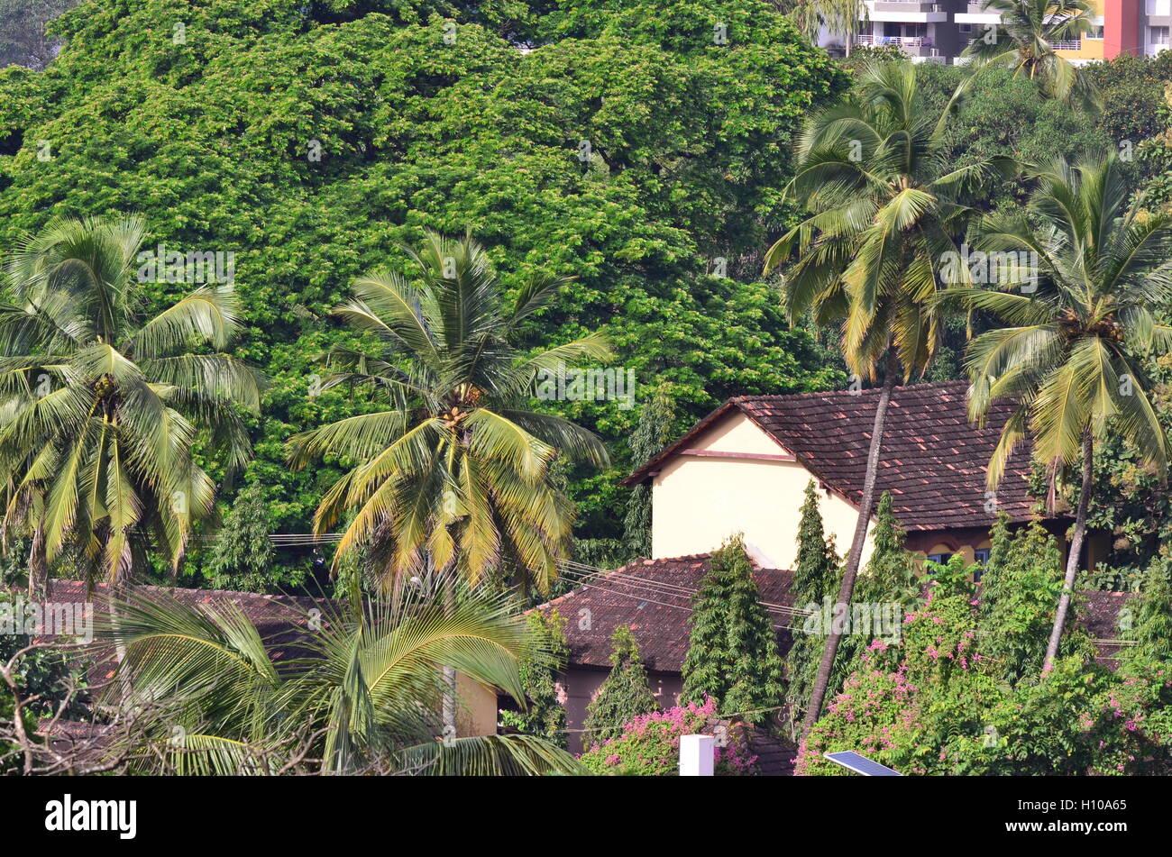 Piastrella tradizionale tetto casa circondata dal verde degli alberi