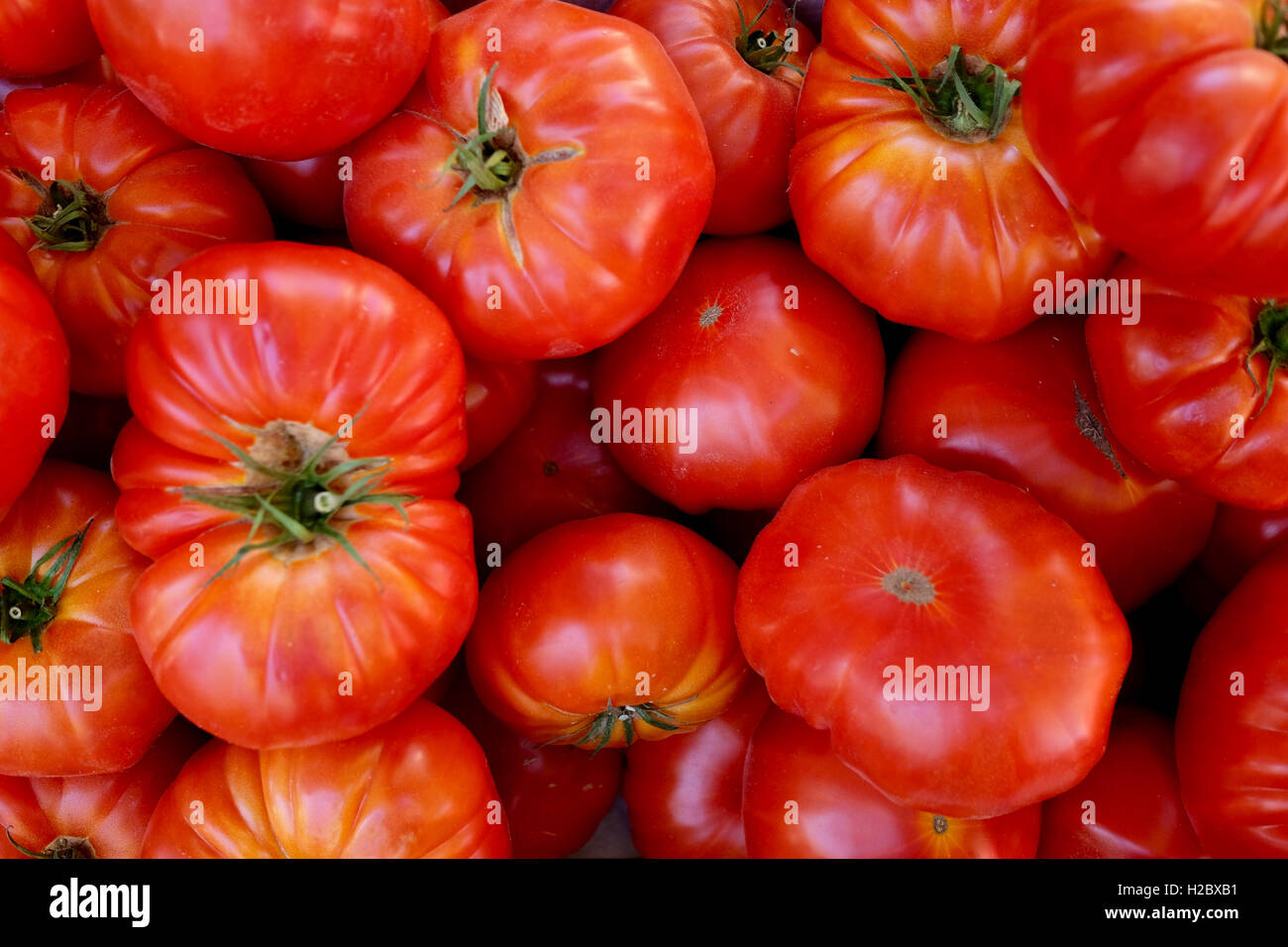 Pomodori per la vendita in un mercato locale Immagini Stock
