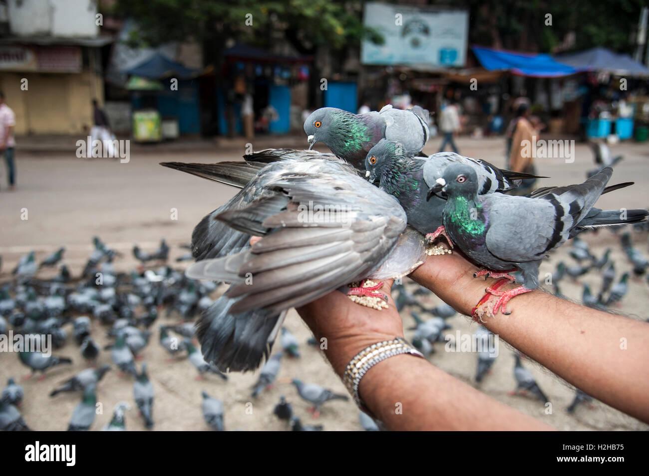 Un uomo indiano alimenta i piccioni a Nampally stazione ferroviaria di Hyderabad, India,2016. Immagini Stock