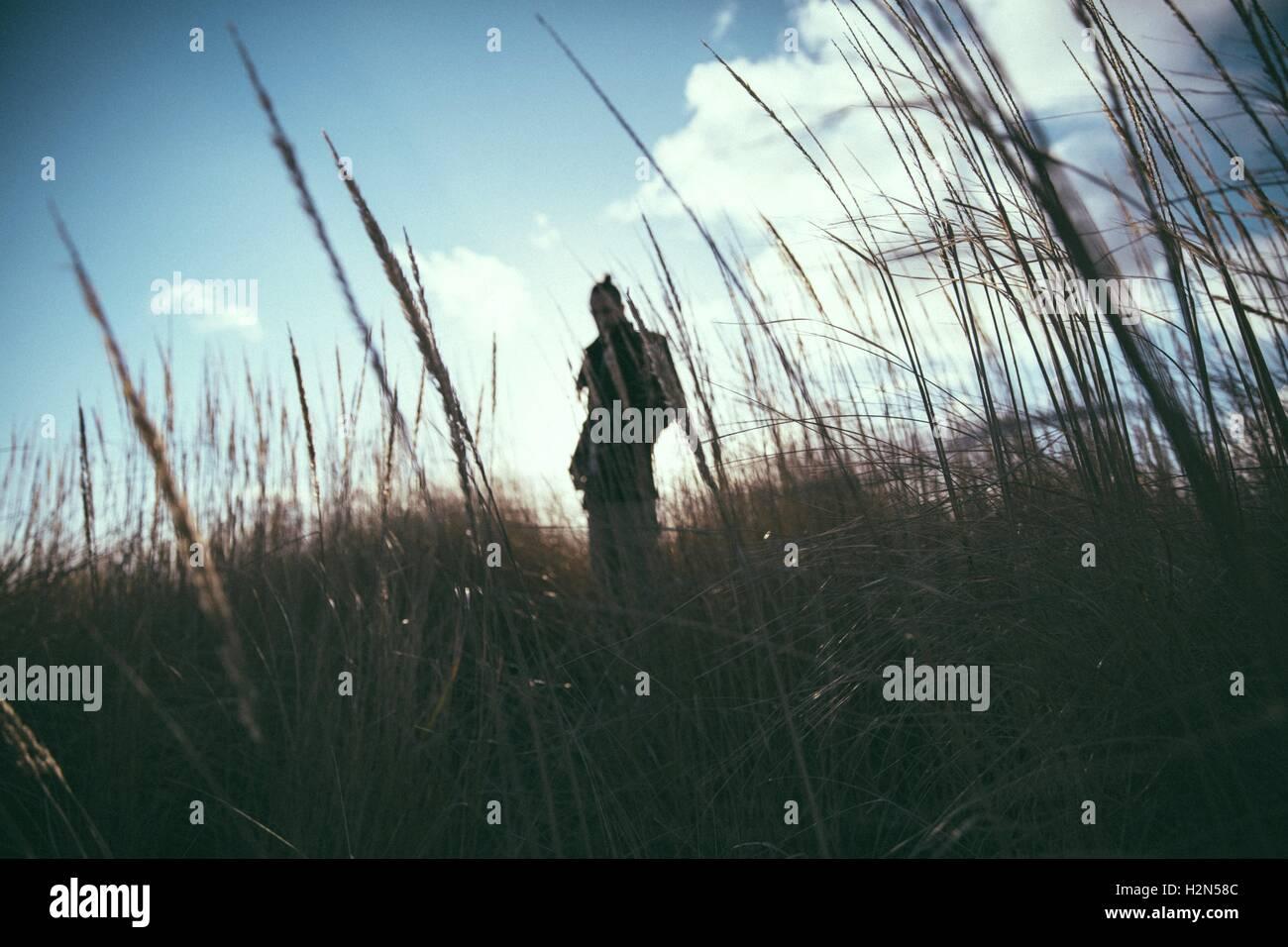 Silhouette attraverso erba alta Immagini Stock