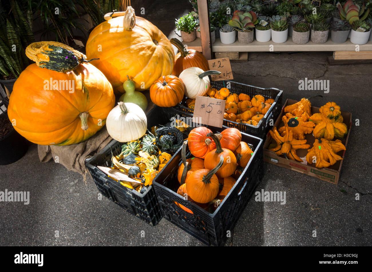 Una varietà di zucche decorative per la vendita prima di Halloween Immagini Stock