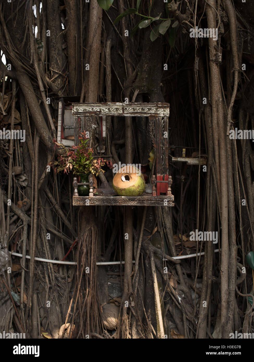 Un offerta di una noce di cocco in un santuario buddista. Offerte simboliche sono destinate ad essere contemplativo. Immagini Stock