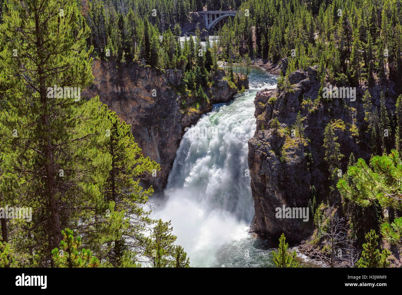 Scende al Grand Canyon del parco nazionale di Yellowstone Immagini Stock
