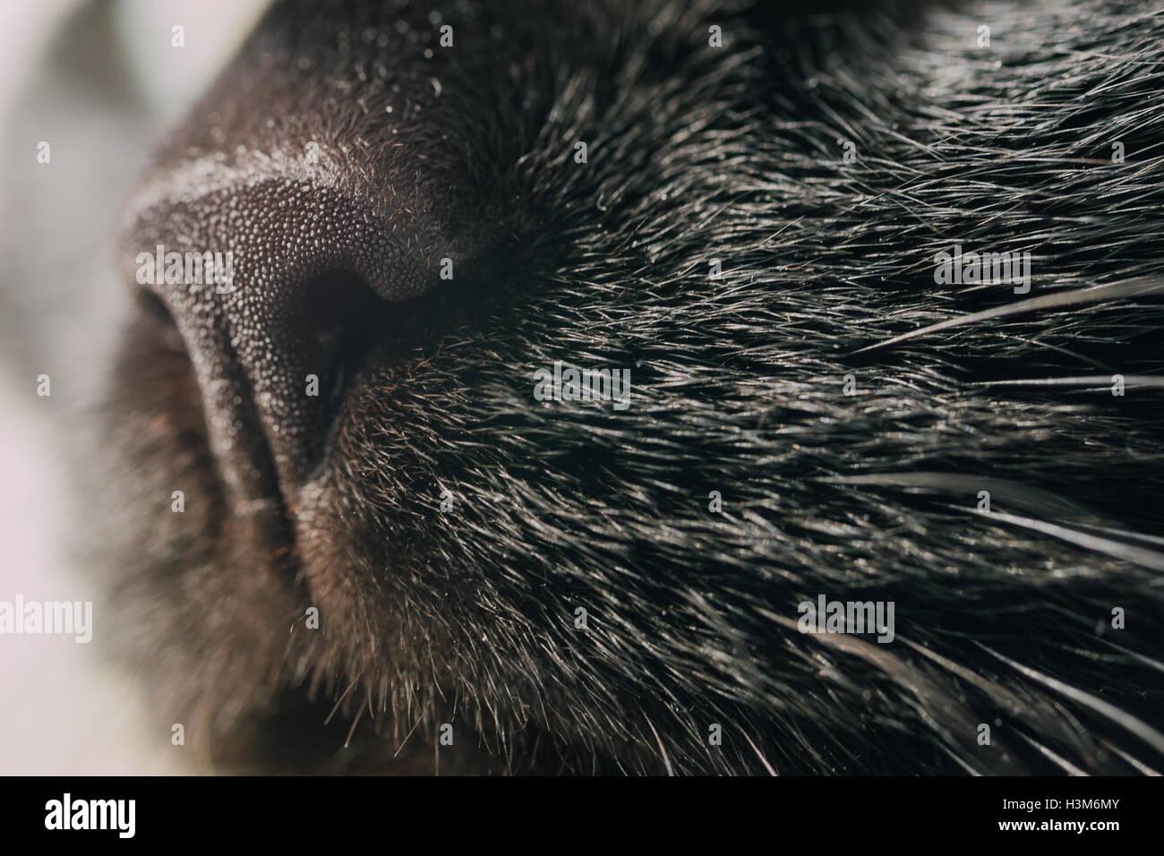 Nero close up micio foto