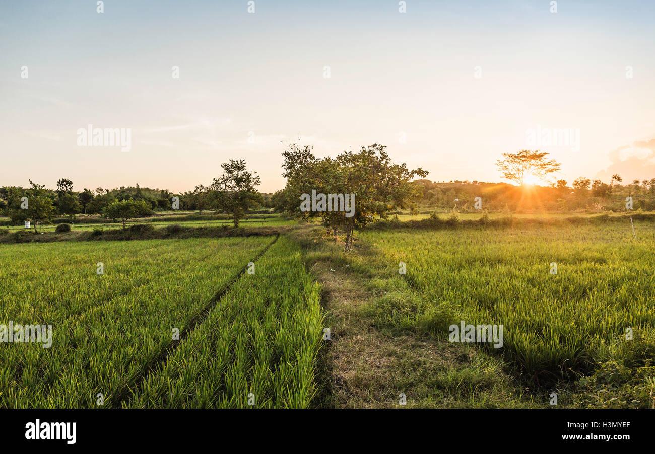 Campo verde paesaggio al tramonto, Lombok, Indonesia Immagini Stock