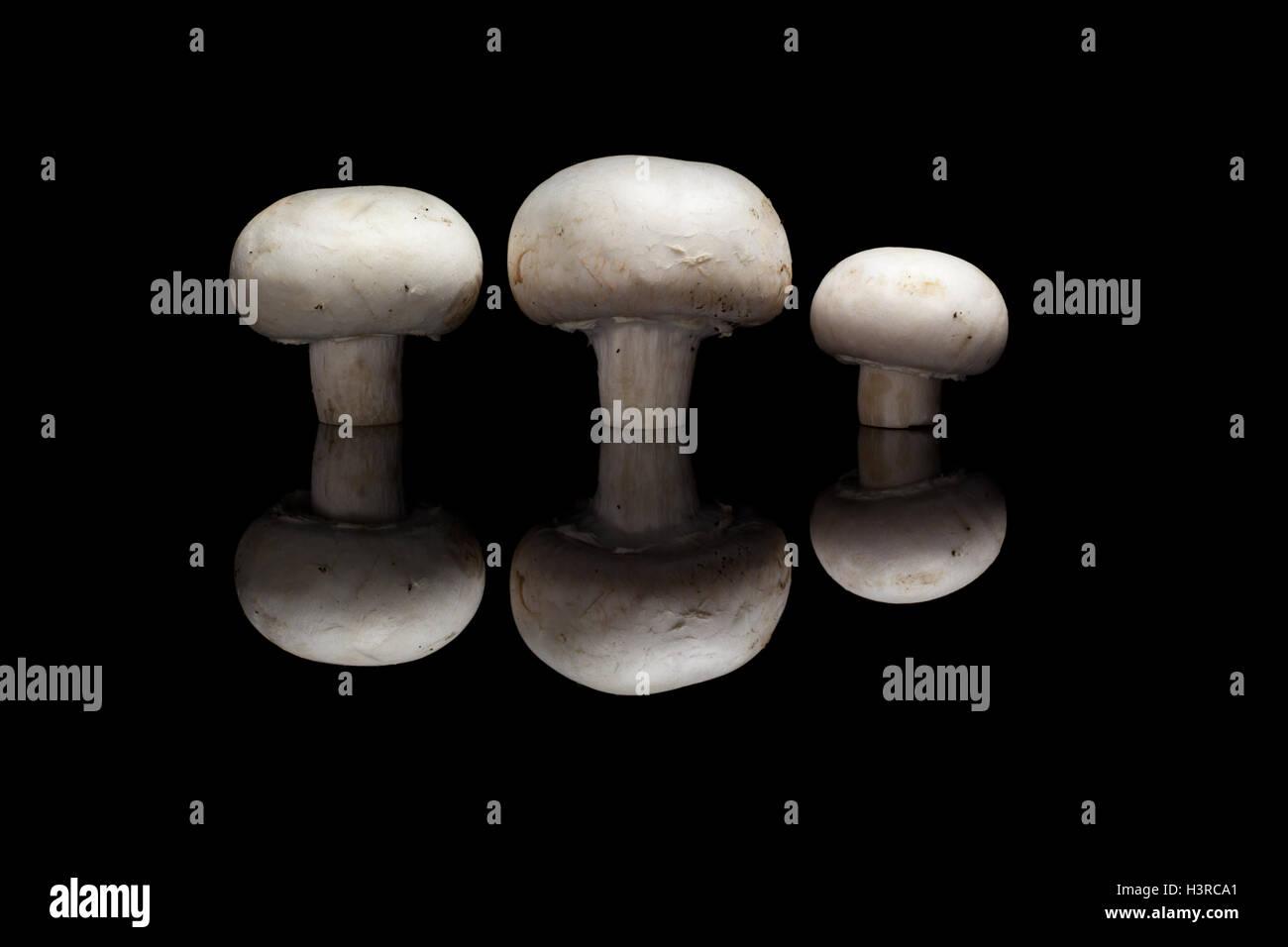 Tre gli champignon isolato nero su sfondo riflettente Foto Stock