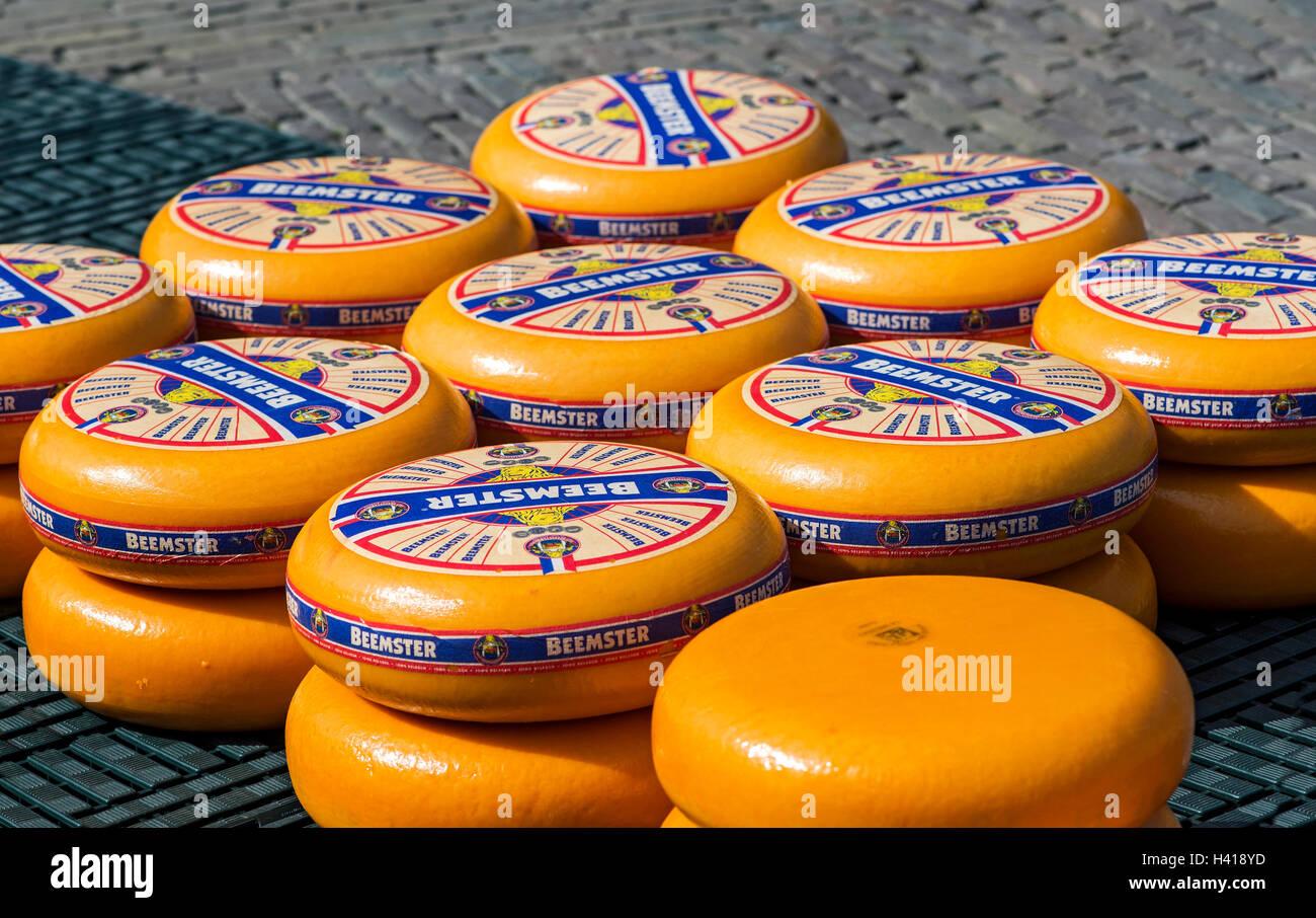 Turni di Beemster olandese formaggio al mercato del formaggio di Alkmaar, Paesi Bassi Immagini Stock