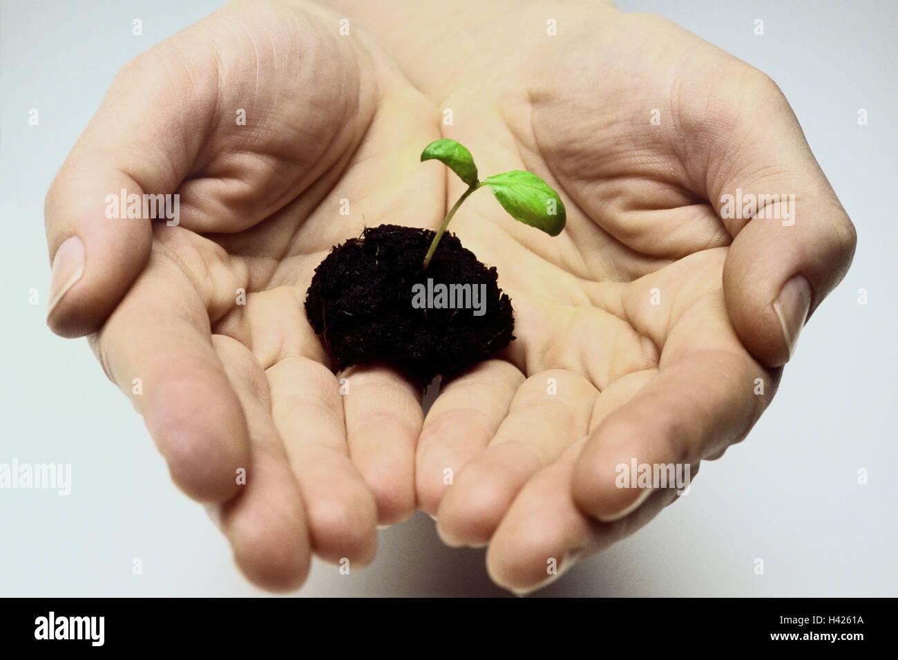 Le mani massa keimling ti persona palme mano superficie