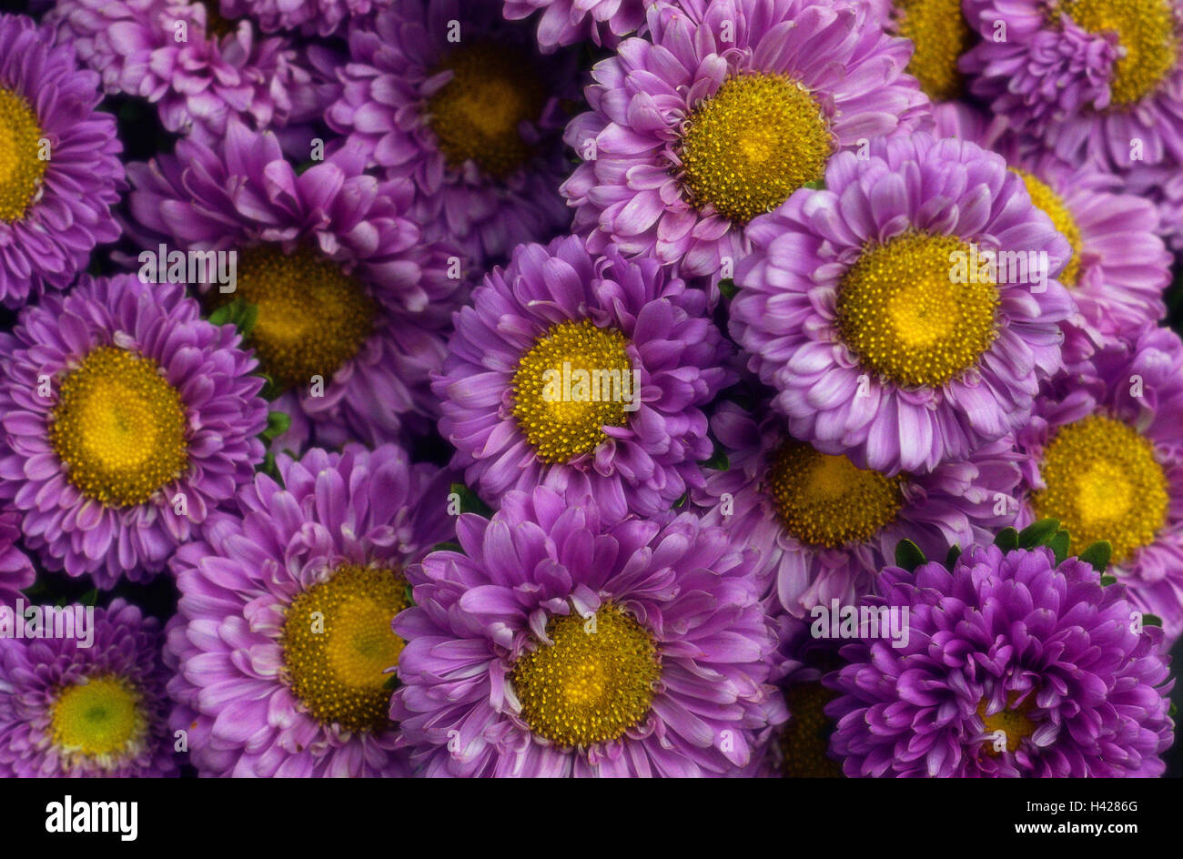 Fiori da giardino aiuola · foto gratis su pixabay