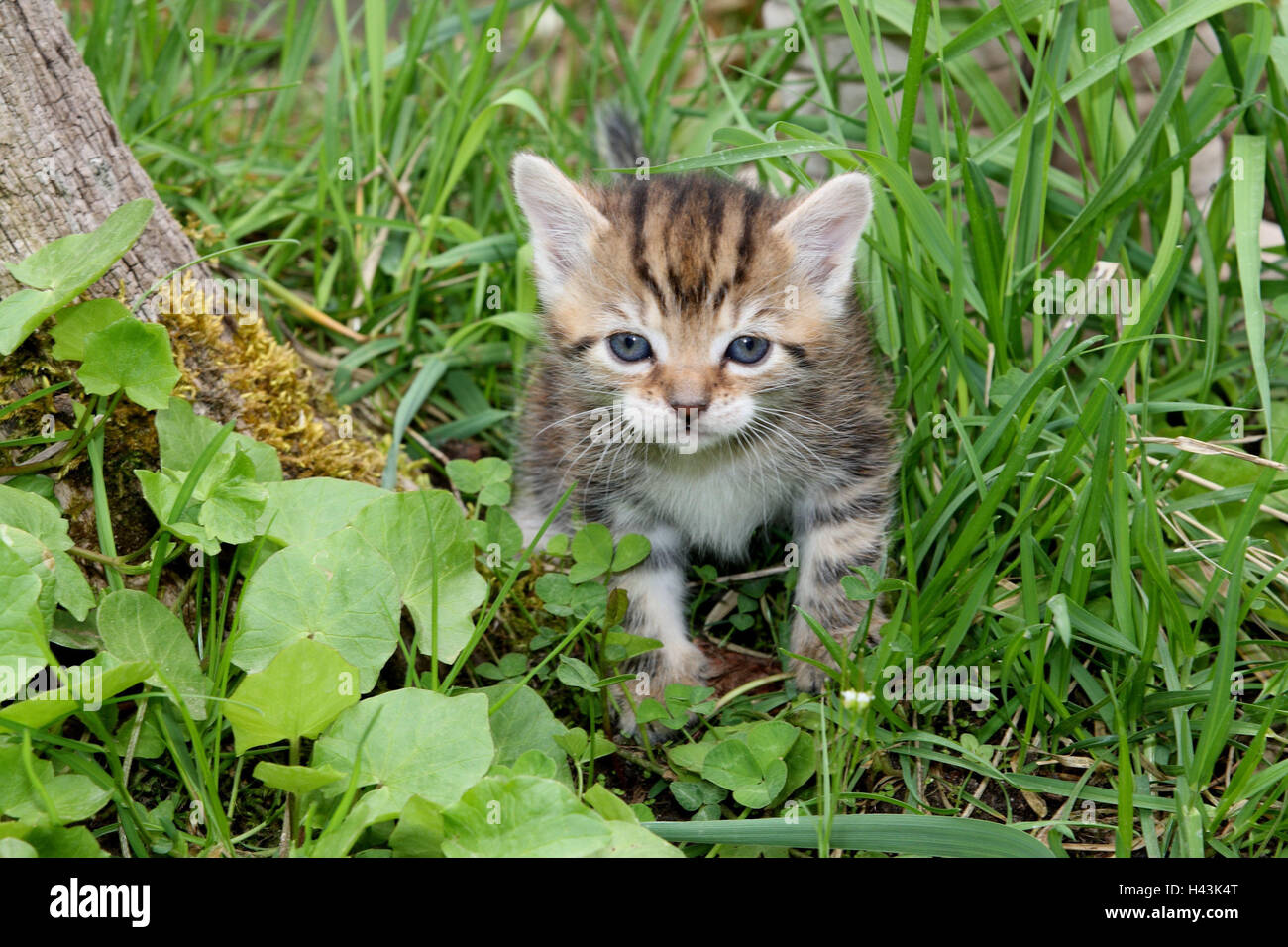 Animali Da Esterno gatto, giovani, esegui, prato, giardino, animali mammiferi