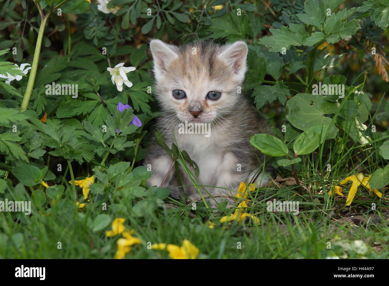 Gatto, giovani, sedersi, prato, giardino, animali mammiferi, animali domestici, gatti piccoli, Felidae, addomestica, Immagini Stock