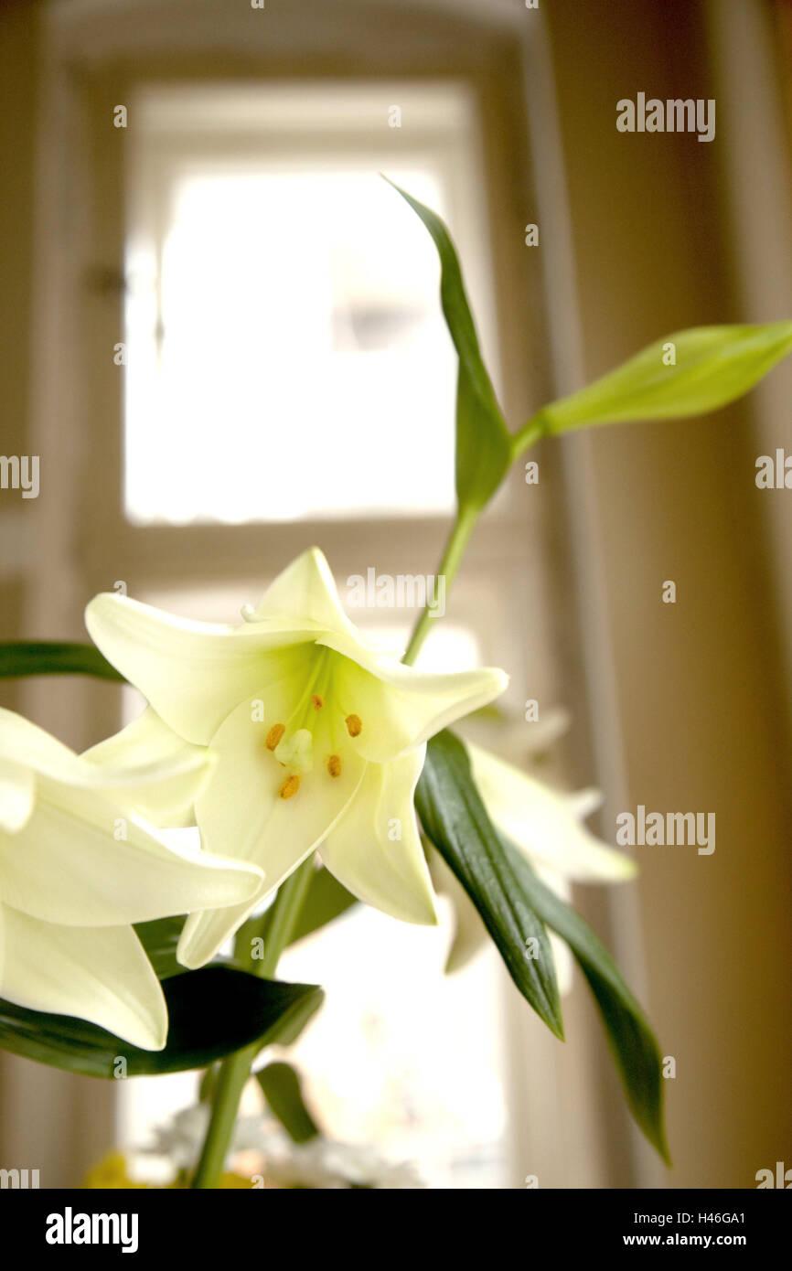 Il Giglio Fiore Interno Fiore Bianco Lilia Piante Fiori Foto