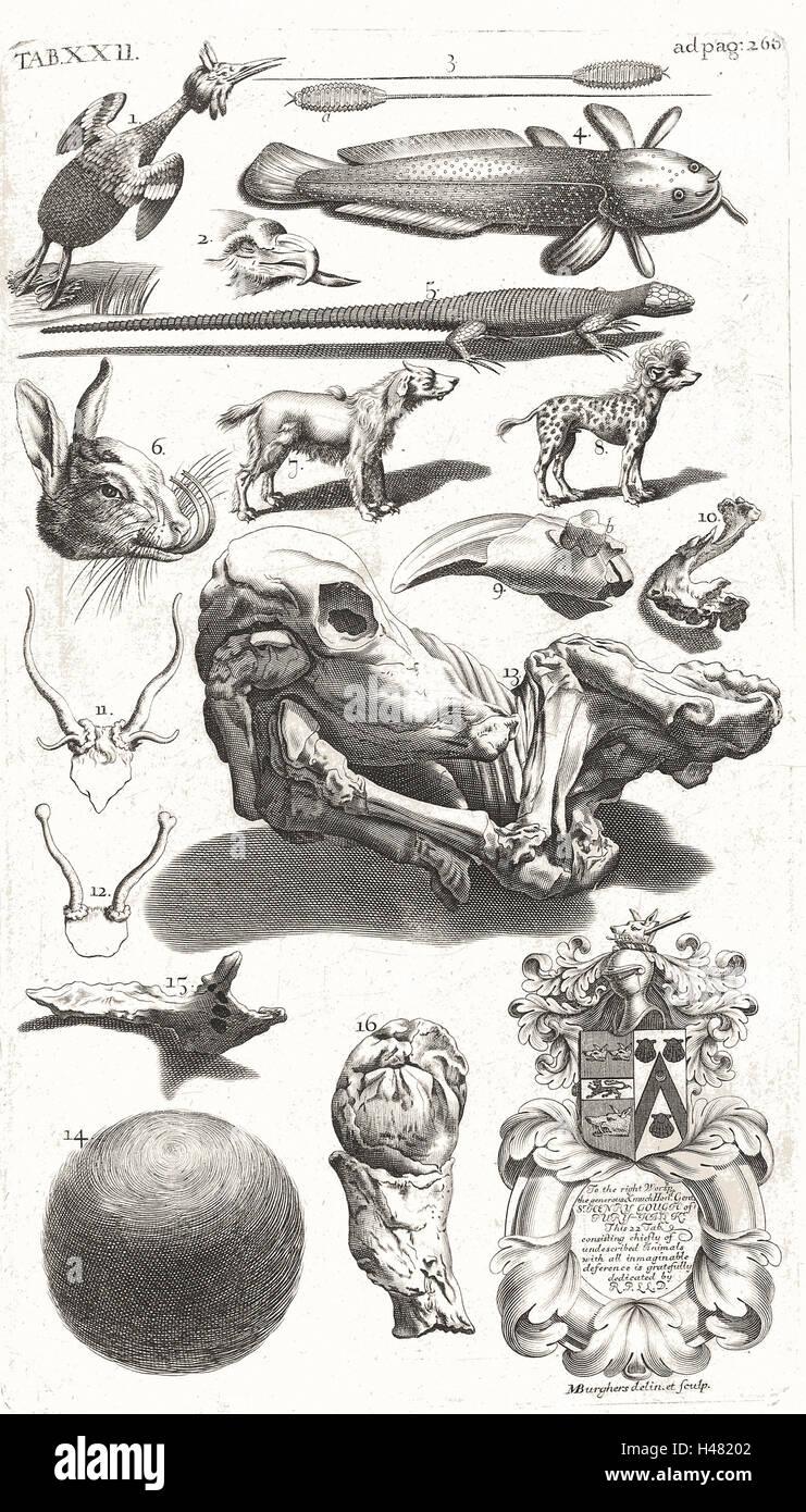Tabella delle illustrazioni di un insolito campioni di storia naturale Immagini Stock