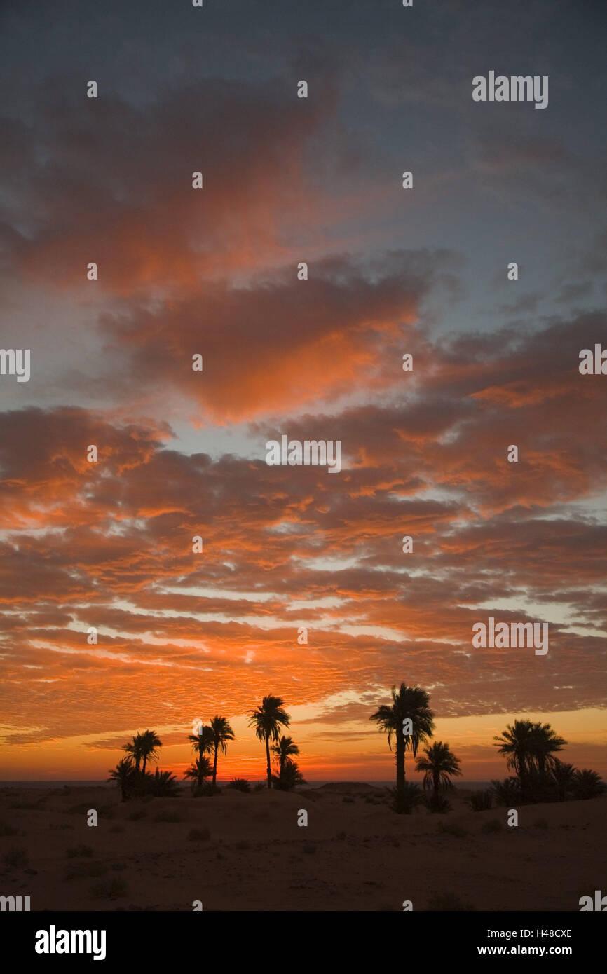 Algeria, Timimoun, deserto, palme, cieli, nuvole, cielo rosso, Africa, Nord Africa, paesaggi, natura, vegetazione, Immagini Stock