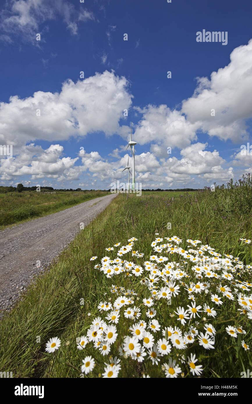 Impianto di energia eolica Holtriem, Westerholt, Immagini Stock