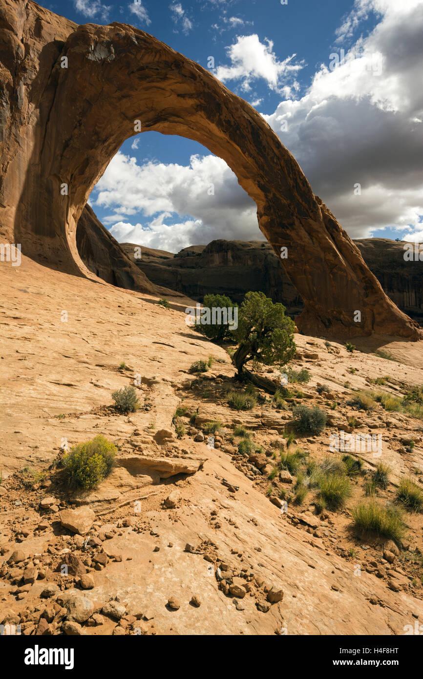 Utah, Potash-Lower Colorado River Scenic Byway, arco di corona Immagini Stock