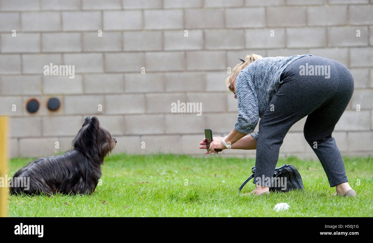 Donna di fotografare il suo cane con un telefono Immagini Stock
