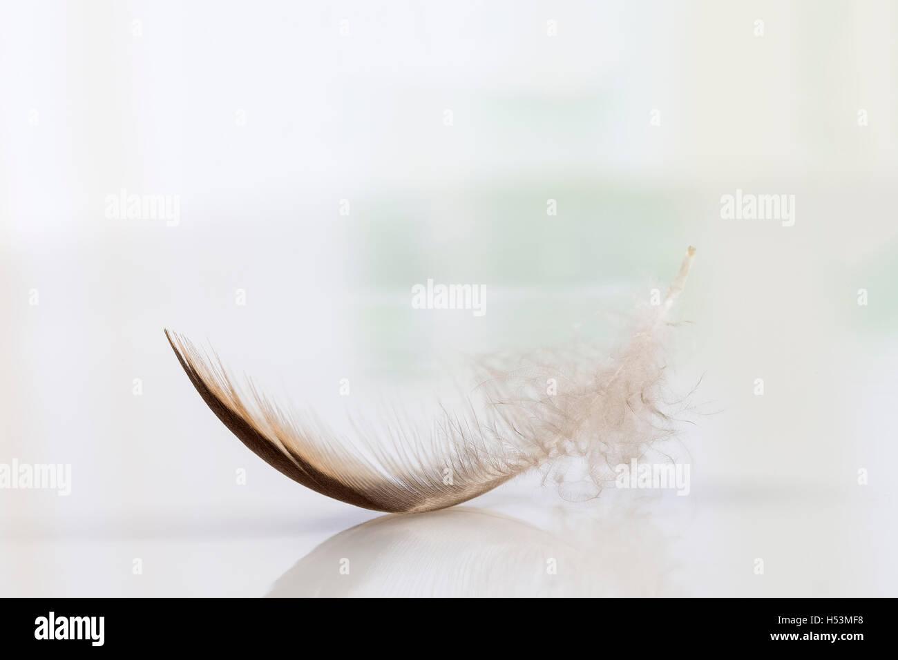 Lone giù nel cielo, simbolo di morbidezza Immagini Stock