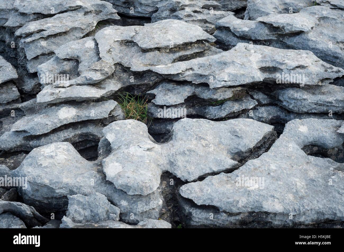 Pavimento In Pietra Calcarea : Gruppo borrelli srl pietra calcarea bianco luce