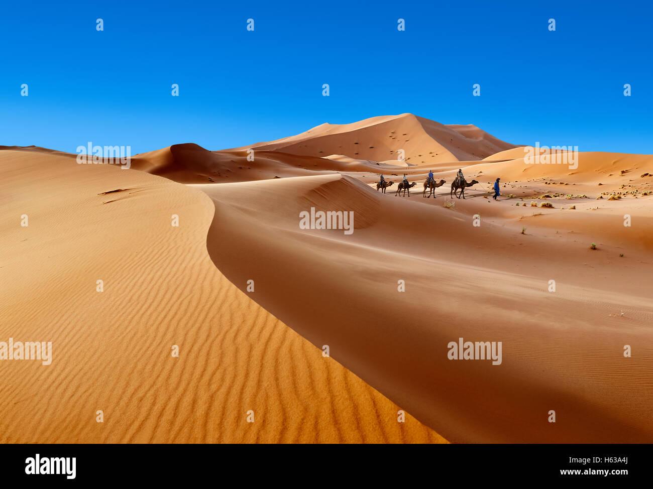 Giri in cammello sul Sahara dune di sabbia di Erg Chebbi, Merzouga, Marocco, Africa Foto Stock