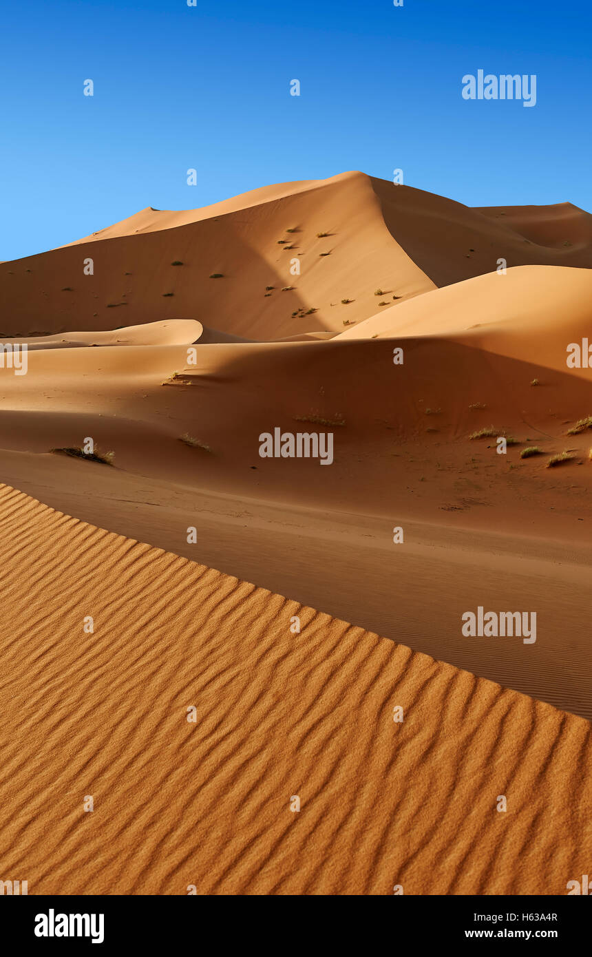 Sahara dune di sabbia di Erg Chebbi, Merzouga, Marocco, Africa Foto Stock