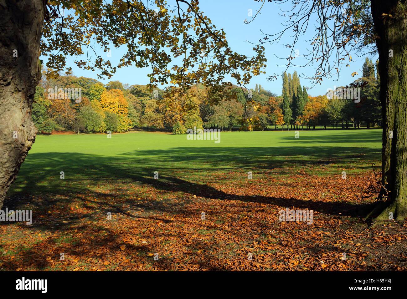 Bellissimi colori autunnali in Thornes Park, Wakefield, Regno Unito. Il sole sottolinea la brillante oro, rosso Immagini Stock