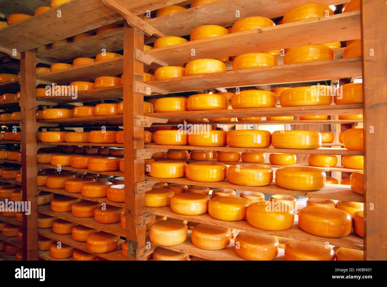 Paesi Bassi, Enkhuizen, stagionatura del formaggio Immagini Stock