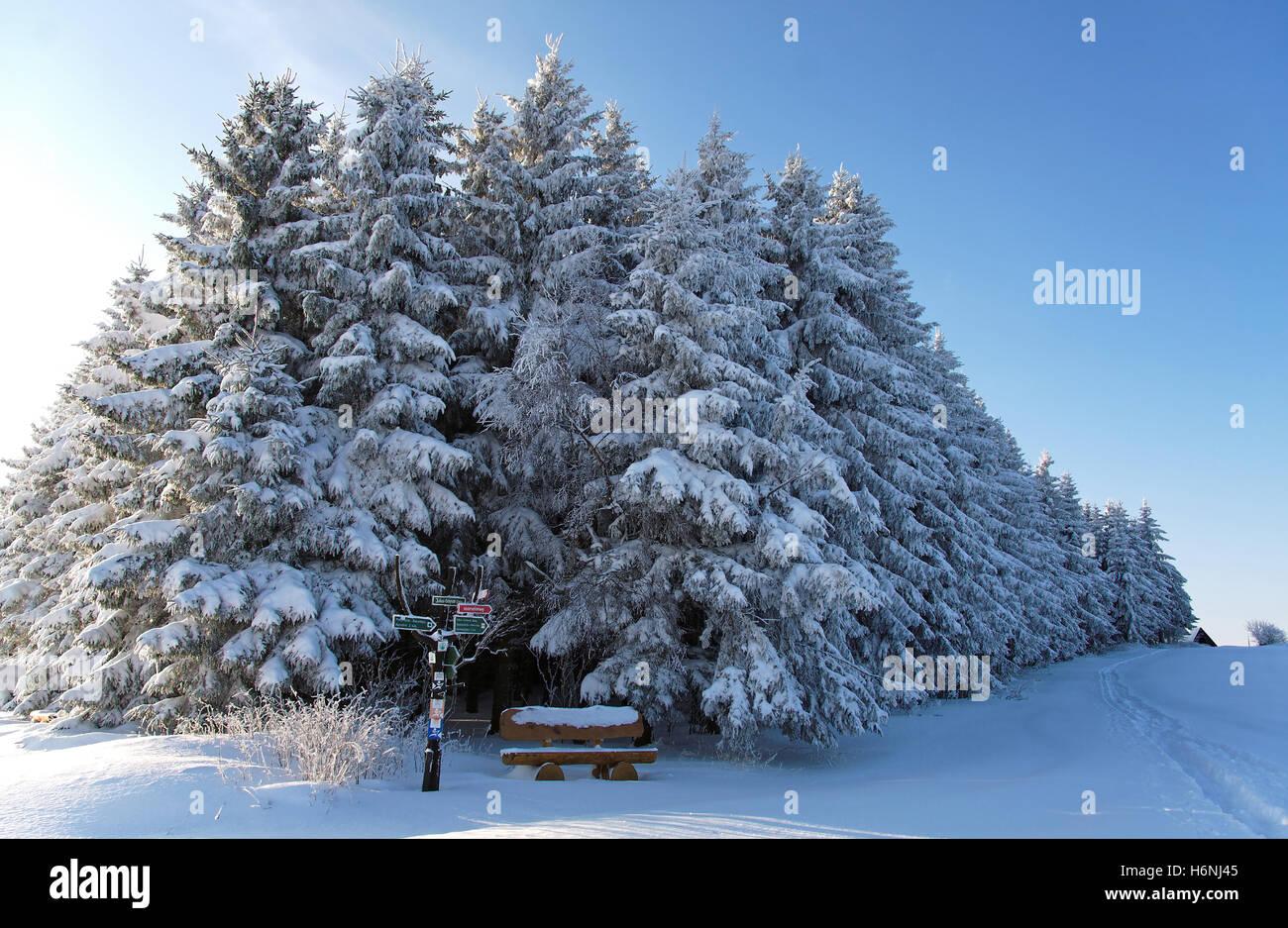 Paesaggio invernale Immagini Stock