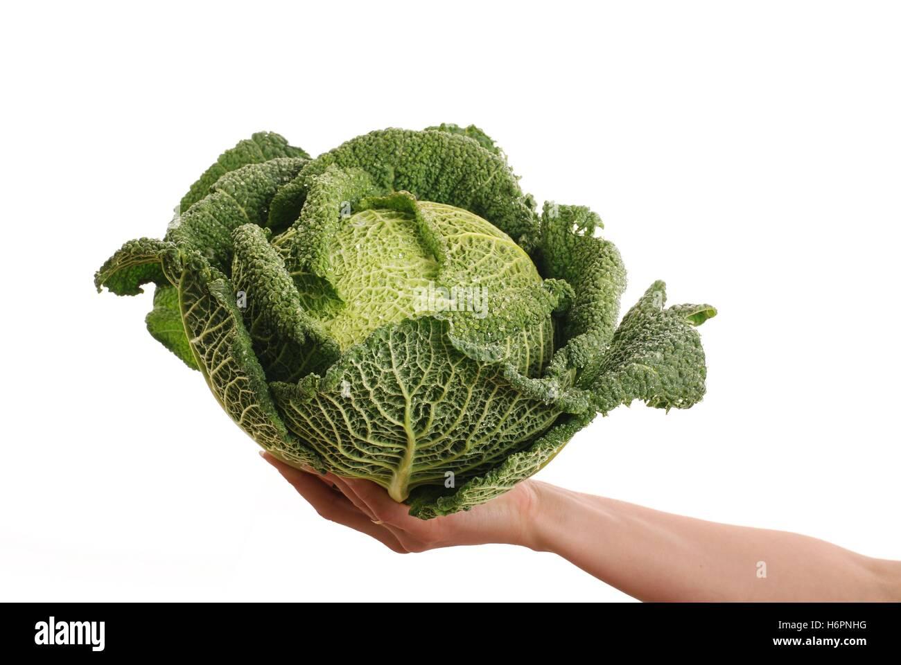 Foglie di cavolo isolati speciali savoy verdura verde erba food aliment foglia dettaglio salute stile di vita isolata Immagini Stock