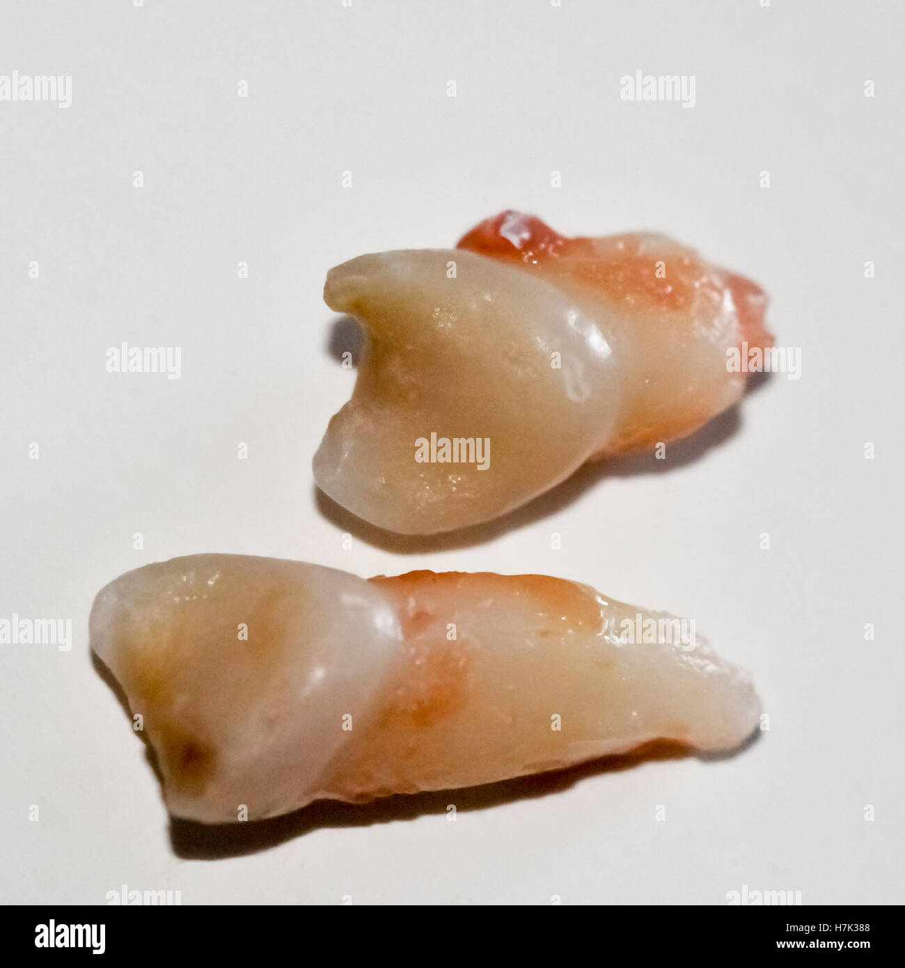 Due denti primari su sfondo bianco Immagini Stock
