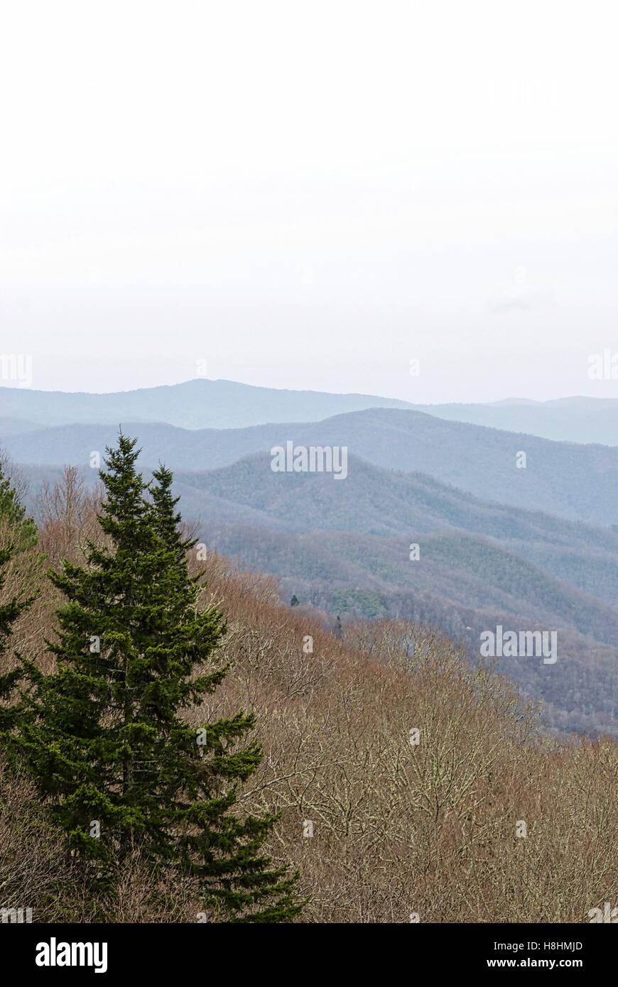 Vista attraverso il Great Smoky Mountains in Tennessee, USA. Immagini Stock