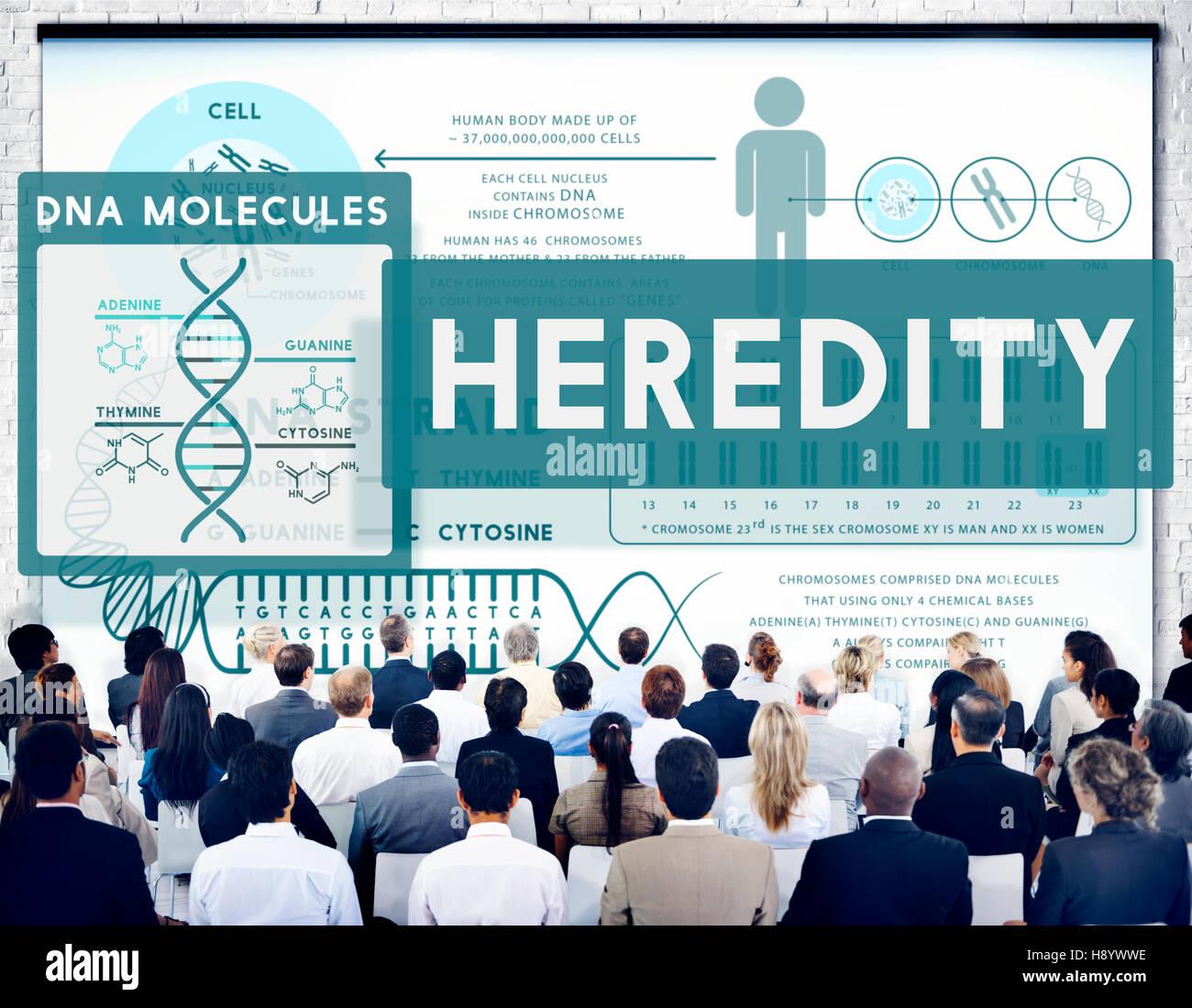 Eredità cromosoma di biologia molecolare concetto di scienza Immagini Stock