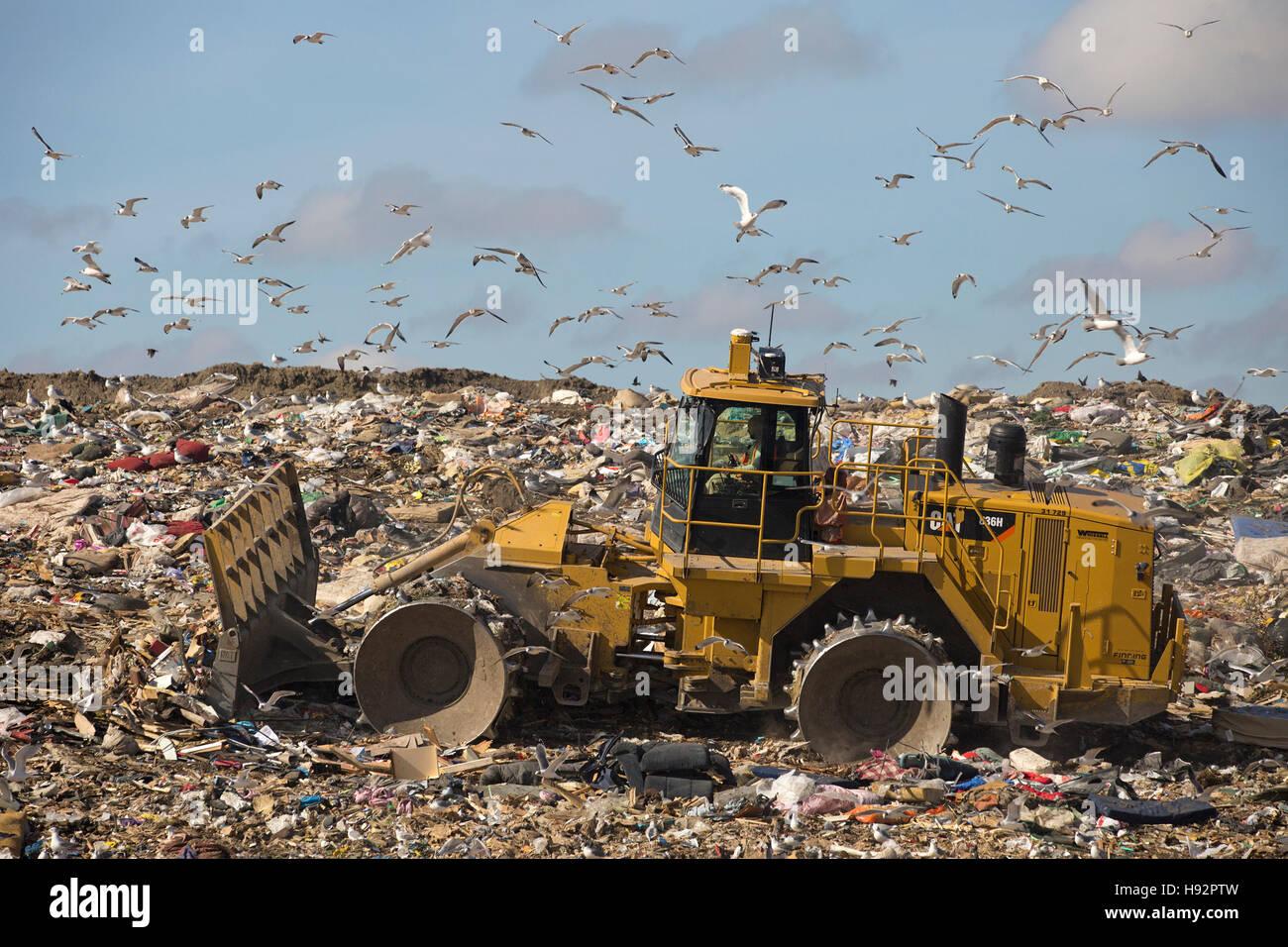 Trashmaster garbage in movimento in una discarica attiva cella al Shepard rifiuti Facility Management con i gabbiani Immagini Stock