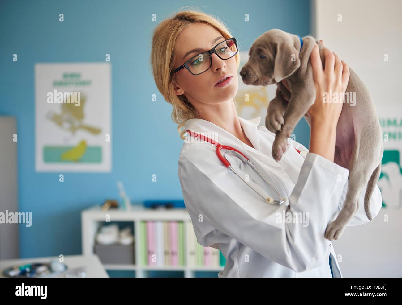 Medico guardando il pet strettamente Immagini Stock