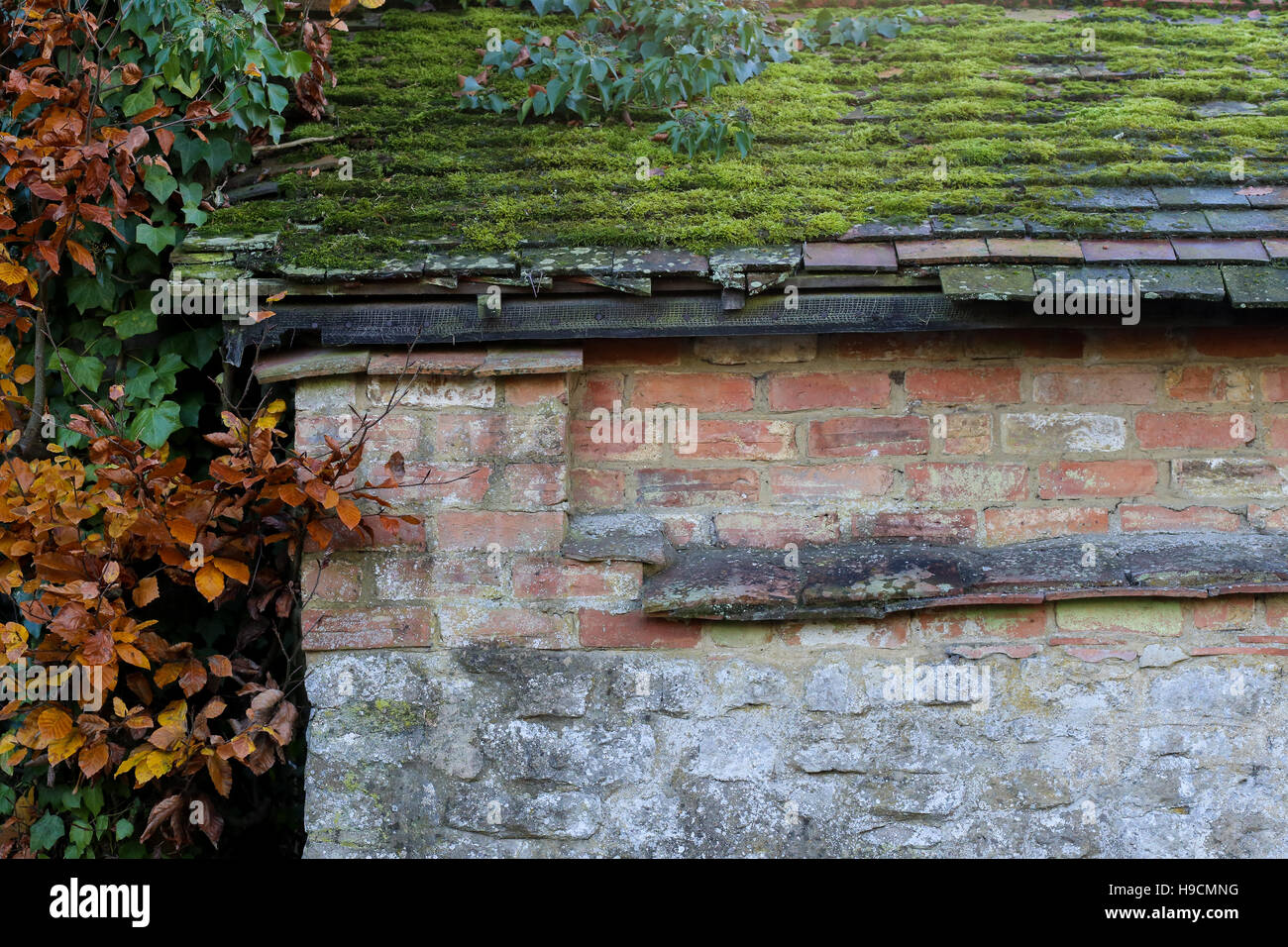 Vecchio tetto piastrelle coperte di muschio e foglie su vecchi