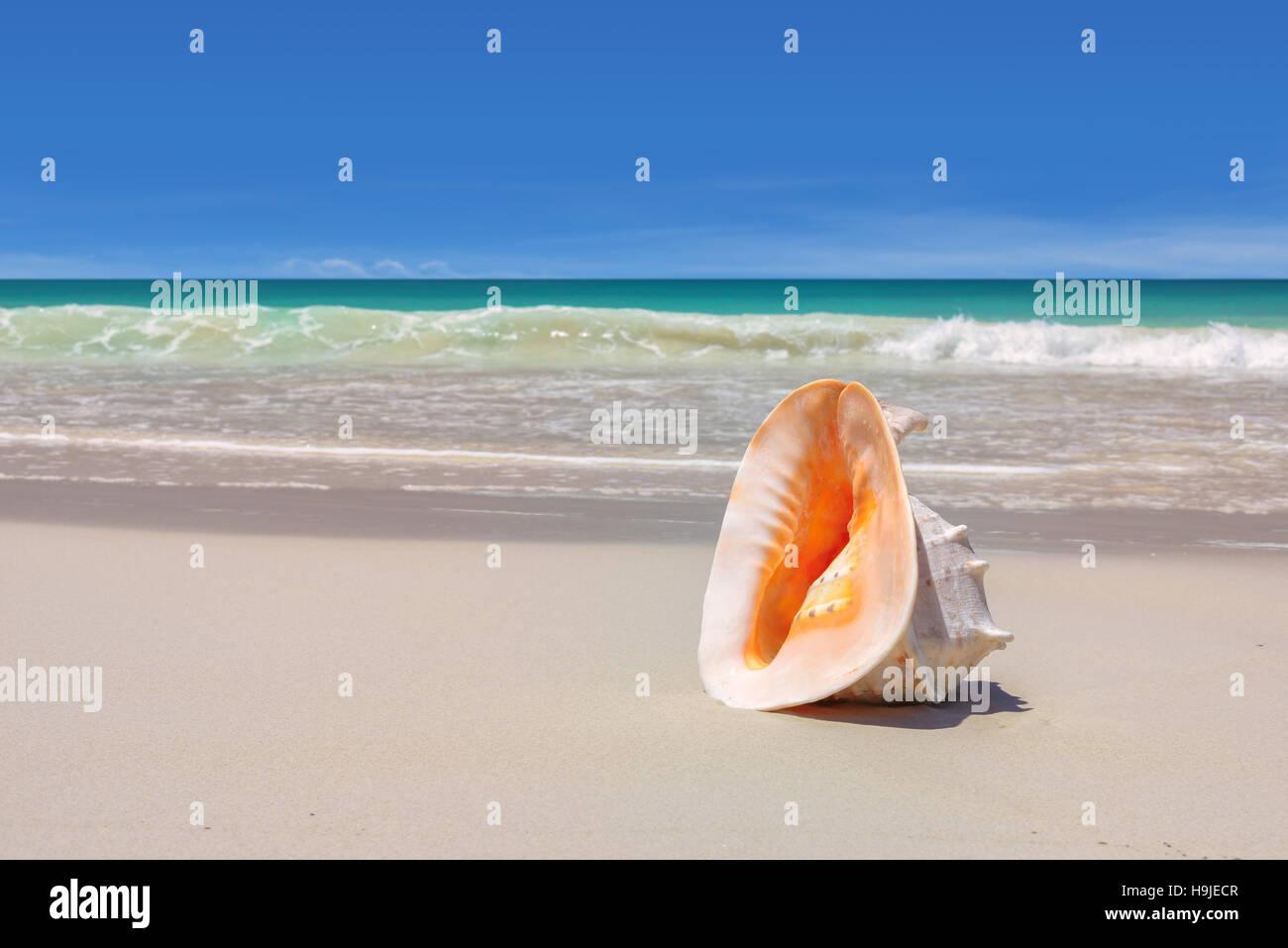 Seashell Sulla Riva Del Mare Spiaggia Vacanze Sfondo Foto