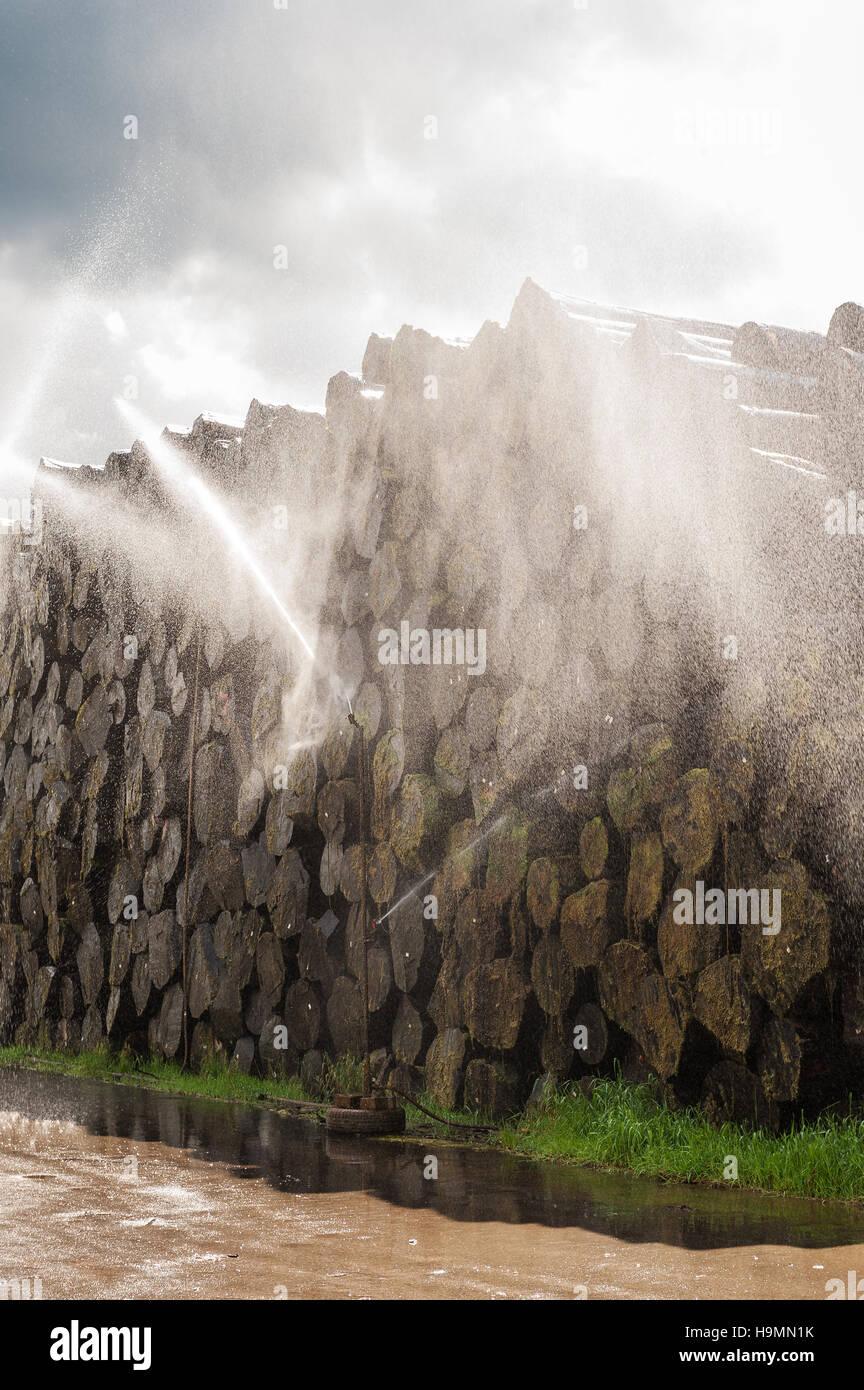 Acqua di trattamento a spruzzo di treetrunks puntellato in legno impianto di trasformazione, Templin, Uckermark Immagini Stock