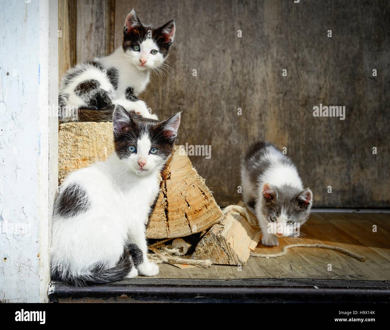 Gatitos / gatti Immagini Stock