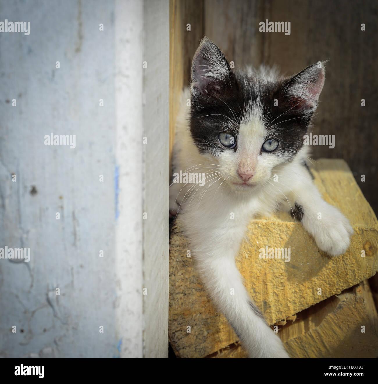 Gatti di piccole taglia Immagini Stock